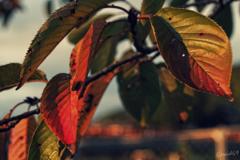 秋色進行中
