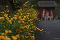 黄色いビロウド