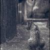 チャコールグレーの猫
