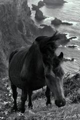 天崖の立髪