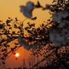 シャンテヒルの落日
