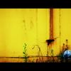 yellow magic