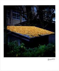 toit jaune