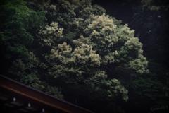 朝日山の山裾