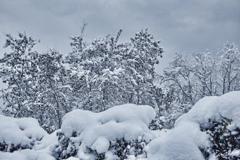 昨晩からの雪
