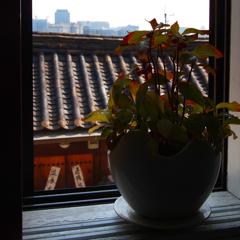 窓辺のアルバム