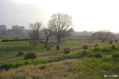 二子玉川緑地運動場の靄