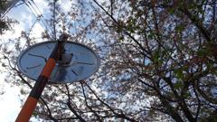 桜が散ったカーブミラーの裏側