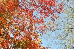 京都のような紅葉