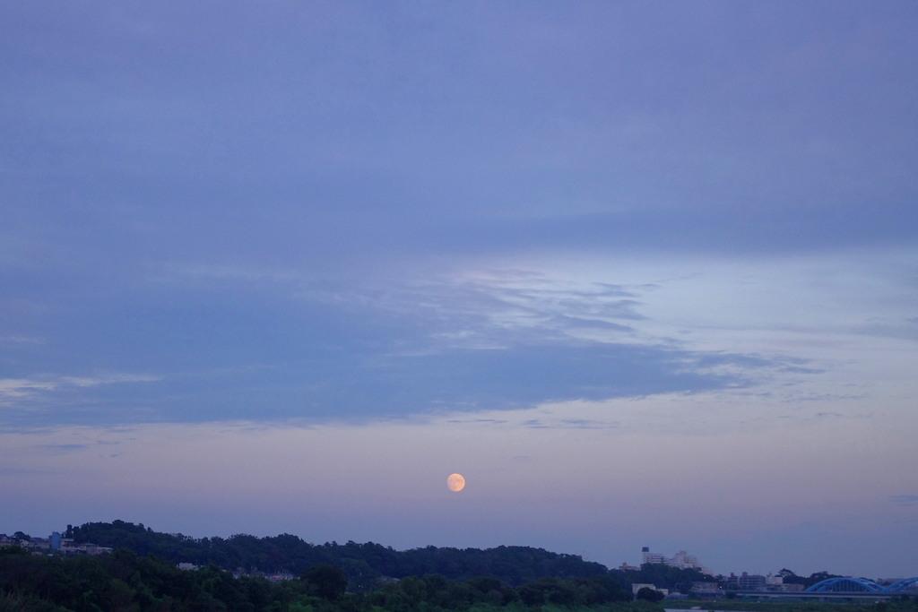 明日が中秋の名月「お月見」