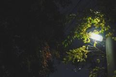 夜の僅かな紅葉