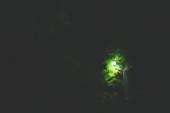 夜の葉っぱ