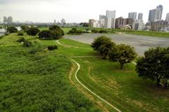 誰もいない緑の公園