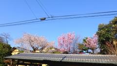 ここは京都かな