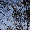 台風24号で散った葉っぱ