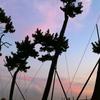 松の木シルエット