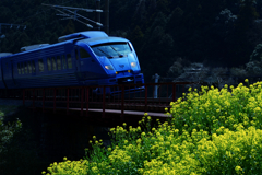 菜の花と青い電車