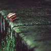 カタツムリと雨の石橋