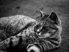 街に生きる猫