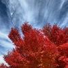 紅葉と秋の空