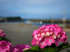 6月の青空と漁港のあじさい