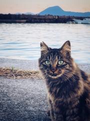 キジトラ猫のポートレート