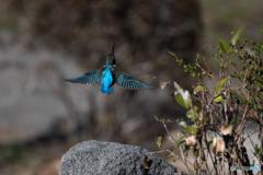 青い三角翼