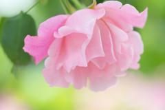春色の記憶