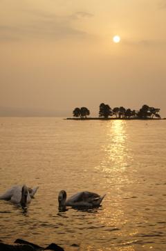白鳥と夕陽