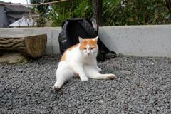 早春の哲猫 2019 その2