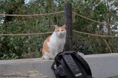 早春の哲猫 2019 その5