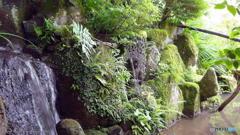 梅雨の晴れ間の宝泉院(再) その5