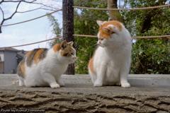 早春の哲猫 2019 その9