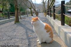 早春の哲猫 2019 その6