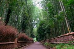 嵐山 2020 文月 その1