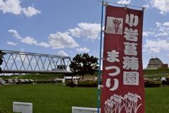 小岩菖蒲園 2019水無月 その1