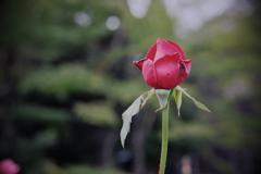 旧古河庭園にて 2019 神無月 その10