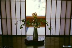 ご隠居(Nikon SP)の試写(宝泉院編) その3