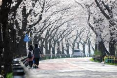桜トンネル散歩