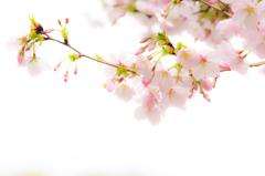ポップな春