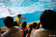 イルカの「べ~」