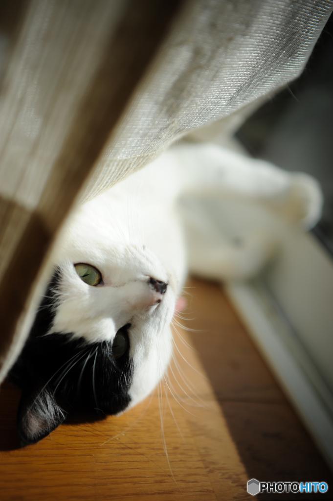 つーちゃんの視線
