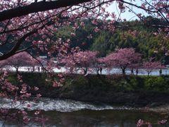 河津桜の在る景色
