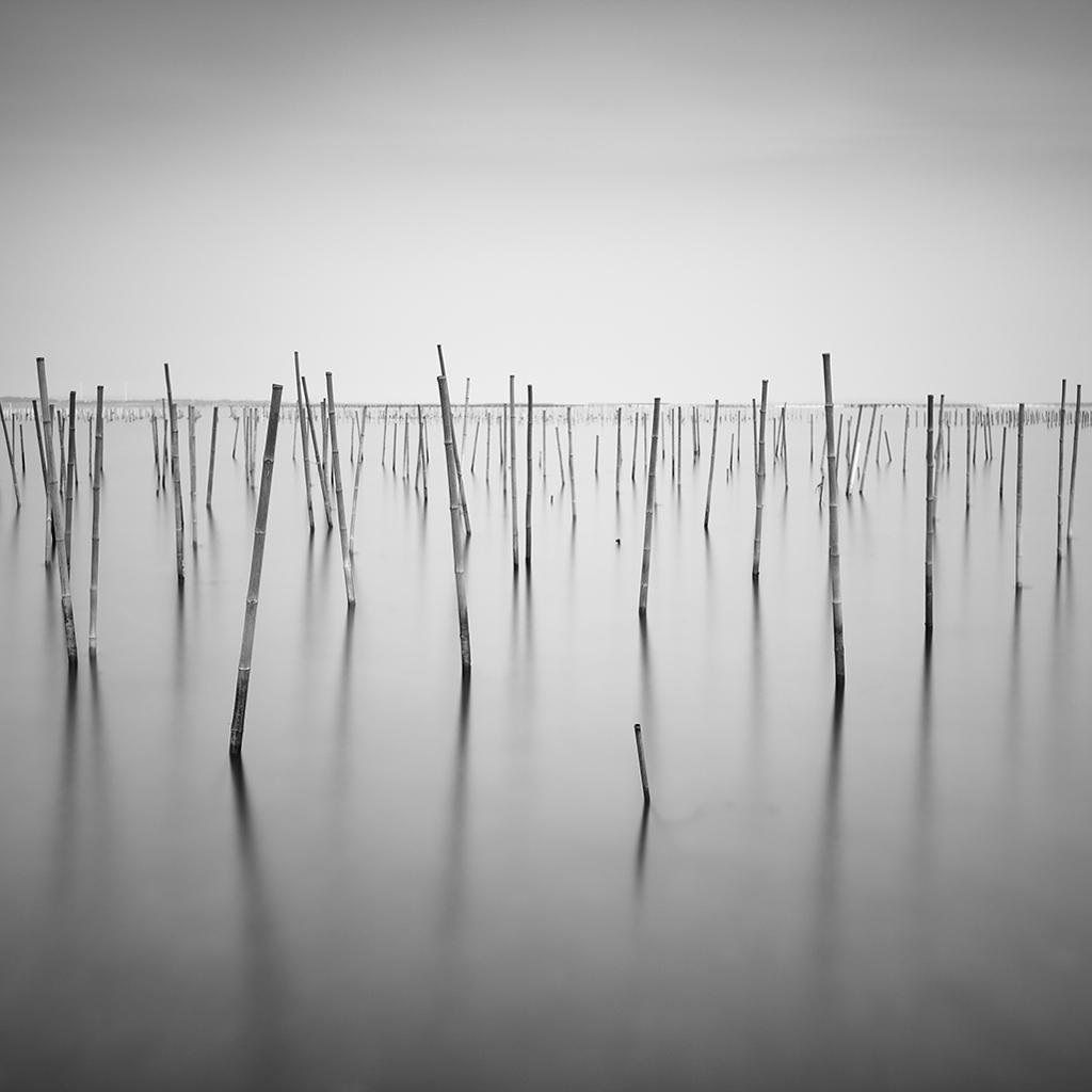 海苔支柱竹