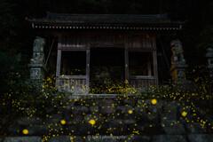 ヒメ神社の煌めき