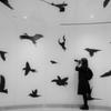 鳥を撮るひと