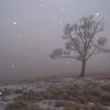 粉雪の舞う丘で