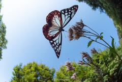 大空が似合う蝶