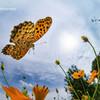 秋の空とヒョウ柄の君