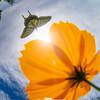 アゲハゴコロと秋の空